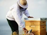 Science and honeybees help GUERLAIN Abeille Royale celebrate 10th anniversary