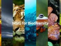 #MARKiesAwards 2021 case study: MSIG protects biodiversity via digital-first approach